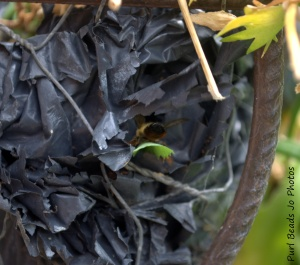 Bees Nest Number 2: bee taking a leaf cutting into the nest.